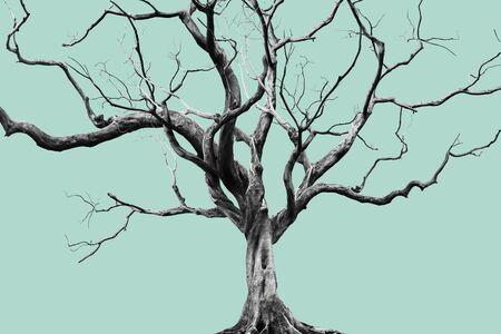 Old Big Giant Tree allein auf gedämpftem Farbhintergrund. Standard-Bild