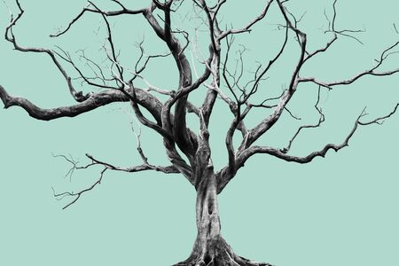 Oude grote gigantische boom alleen op gedempte kleur achtergrond. Stockfoto