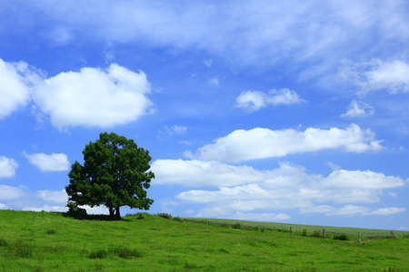 romantically: romantically landscape with tree and blue sky