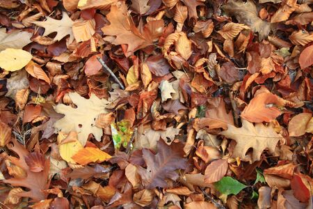 autumn leaves on the ground in the forest photo