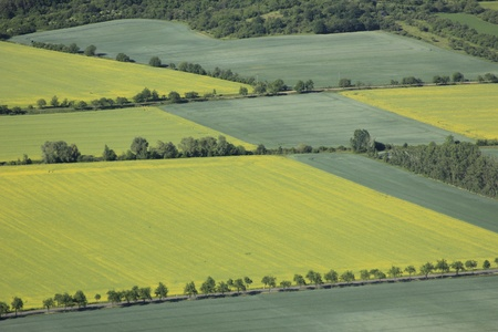 hedges: aerial view of arable land