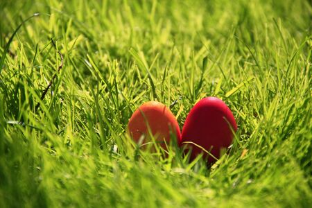red easter eggs in a nest in green grass photo