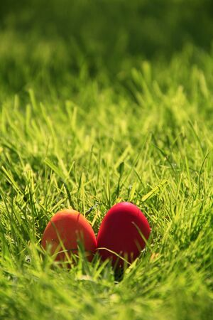 red Easter eggs in freshly green grass photo