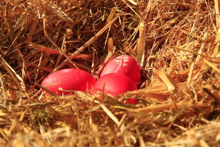 three red Easter eggs in a nest made of straw photo