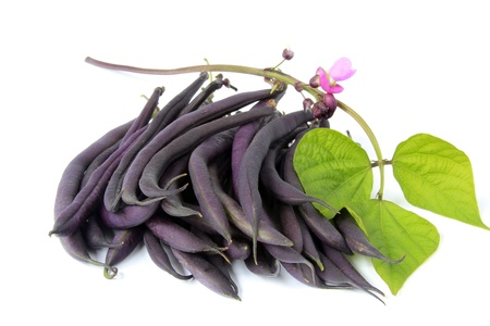 faboideae: blue beans with blossom and leaves before a white background