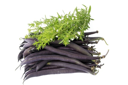 blue beans with winter savory before white background Stock Photo - 13165708