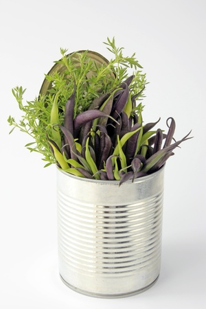 faboideae: Blue and yellow beans, freshly picked, and with winter savory in a tin can Stock Photo