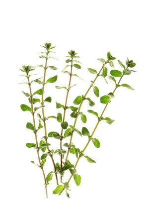 marjoram: freshly picked marjoram twigs, before a white background Stock Photo
