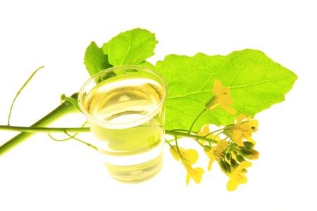 napus: flowering oilseed rape before white background Stock Photo