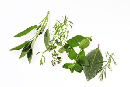 fresh picked garden herbs before white background Stock Photo - 14045234