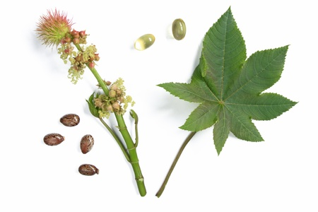 Flower and leaf of the castor plant, before a white background with castor oil capsules for oral use in cases of constipation an some seeds