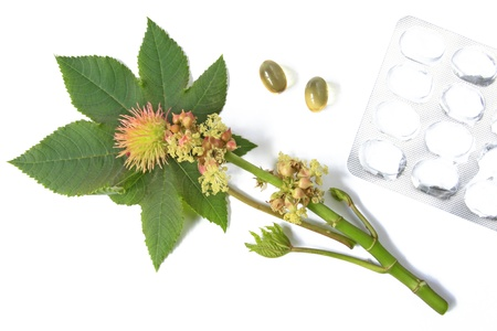 laxatives: Flower and leaf of the castor plant, before a white background with castor oil capsules for oral use in cases of constipation and an empty blister packaging Stock Photo