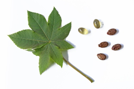 laxatives: One leaf of the castor plant, before a white background with castor oil capsules for oral use in cases of constipation and some seeds
