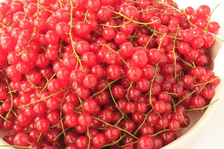 red currants: freshly picked red currants