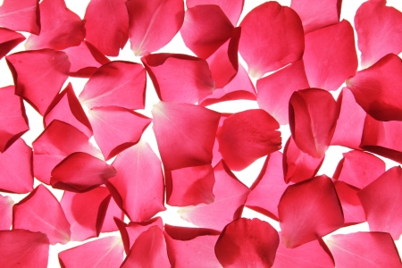 background made of rose petals Stock Photo - 14703013