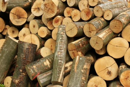 sawn: Firewood, sawn tree trunks stacked outside to dry