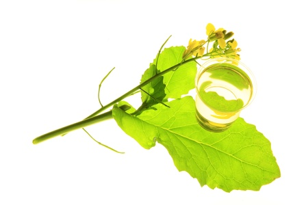 napus: flowering Canola plant  Brassica napus  with vegetable oil isolated against a white background Stock Photo