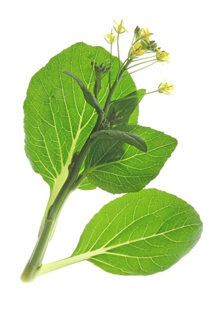flowering kale: flowering Bok Choi  Brassica rapa chinensis  isolated against a white background