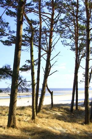 Coastal Forest on the Island Usedom, Germany Stock Photo - 15056339