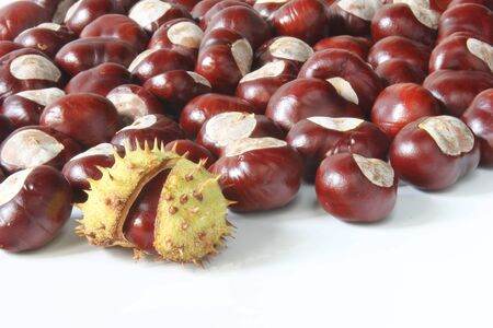 Horse chestnuts  Aesculus hippocastanum  Stock Photo - 15449908