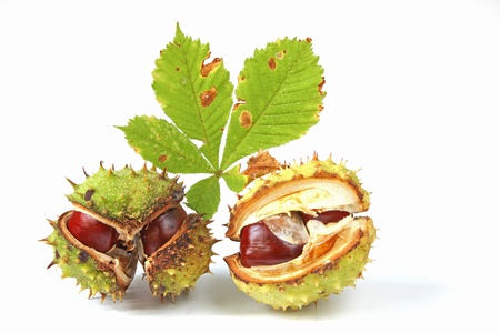 Horse chestnuts  Aesculus hippocastanum  with a leaf, isolated before white background photo