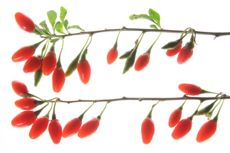 wolfberry: Ripe berries of the Goji plant (Lycium barbarum) isolated in front of white background