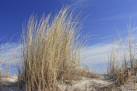 バルト海の砂丘に浜辺の植物
