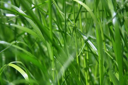 Fresh green grass Stock Photo - 16427910