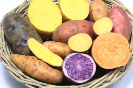 tuberosum: Many different varieties of potatoes, some halved - potato  Solanum tuberosum  and sweet potato  Ipomoea batatas