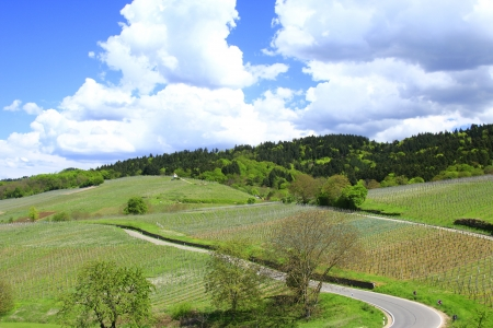 Vineyards at the  Kaiserstuhl  region, Baden-Wurttemberg, Germany in spring Stock Photo - 17448762