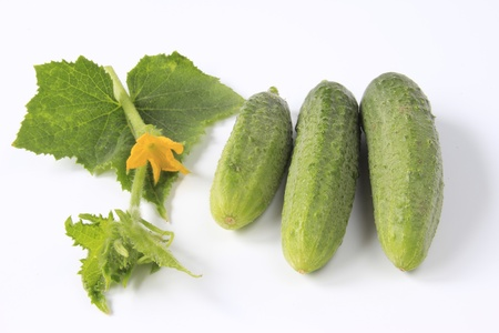 cucumis sativus: Three pickling cucumbers  Cucumis sativus , in front of white background with a flowering tendril