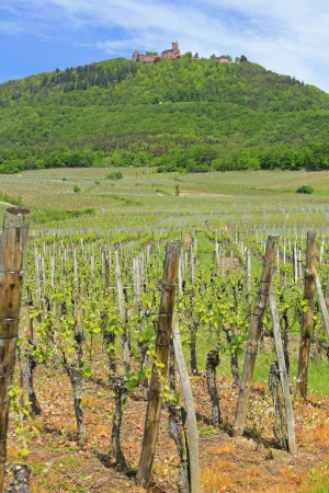 haut: Vineyards in Alsace, France Stock Photo