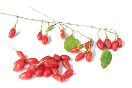 ripe, freshly picked goji berries  Lycium barbarum  photo
