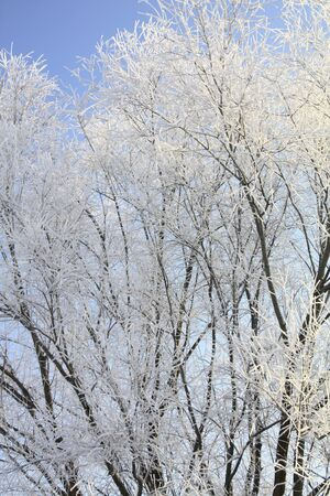 hoar frost: A cold winter with hoar frost in the Elbe Valley at Meissen, Saxony, Germany