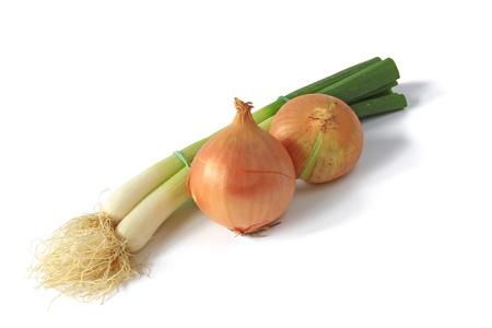allium cepa: Spring onion and onion  Allium fistulosum and Allium cepa