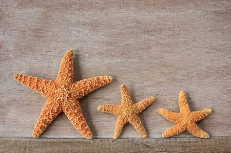 Starfish  Asterias rubens  from the North Sea on an old wooden board photo