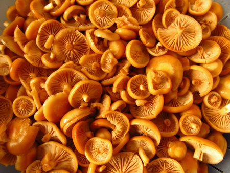 Nameko Mushrooms, cleaned and washed - ready for cooking Stock Photo - 18214505