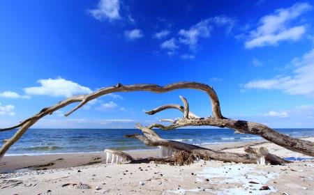 半島 Fischland-ダールス-ツィングスト バルト海、Mecklenburg 西部の Pomerania、ドイツの西部のビーチで覆さ木
