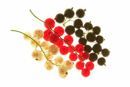 ribes: Red, yellow   white   and black currant  Ribes rubrum and Ribes nigrum , fruits against a white background Stock Photo