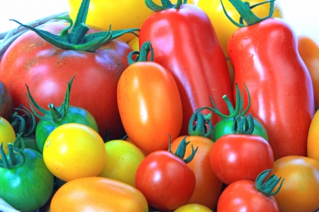 Various types of tomatoes in many colors  Solanum lycopersicum  Imagens
