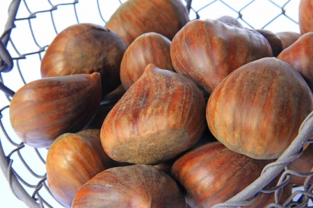 castanea sativa: Ripe maroons, fruits of the sweet chestnut tree  Castanea sativa