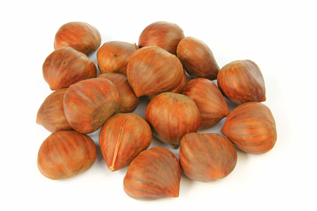 castanea sativa: Ripe maroons, fruits of the sweet chestnut tree  Castanea sativa  isolated before white background Stock Photo