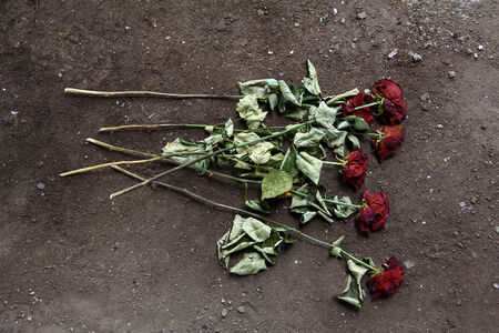 transience: Withered roses lying on dark ground Stock Photo