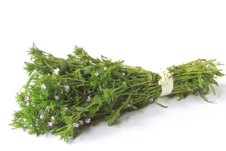 A bunch of garden savory or summer savory  Satureja hortensis  in front of white background Stock Photo