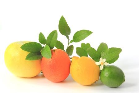감귤류의 과일: Various citrus fruits  grapefruit, orange, lemon and lime with flowering citrus branch 스톡 사진