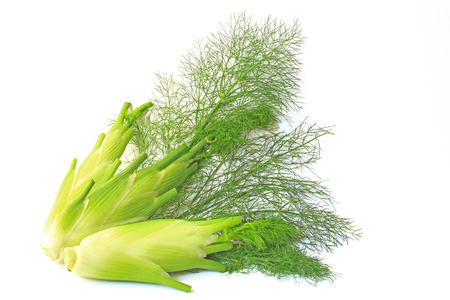 foeniculum vulgare: three fennel bulbs isolated in front of white background