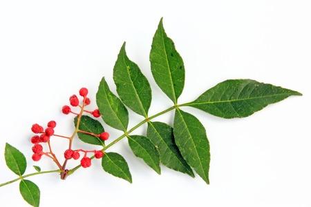 Szechuan pepper (Zanthoxylum piperitum), fruits isolated against white background Stock Photo