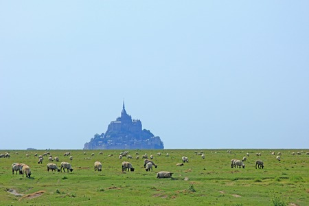 mount saint michael: Flock of sheep graze in front of the Mont-Saint-Michel, Brittany, Normandy, France Stock Photo