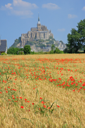 mount saint michael: Cornfield with poppies, in background the Mont Saint Michel on the border of Brittany to Normandy, France Stock Photo