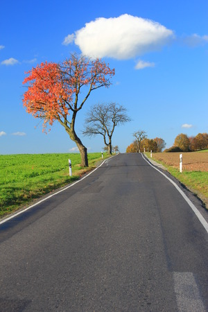no lines: Autumn tree on a country road in Lusatia, Saxony, Germany Stock Photo